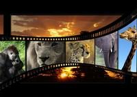 Visionnement d'un documentaire sur la nature!