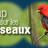 Cap sur les oiseaux à la Biosphère