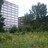 Écosystèmes urbains et biodiversité