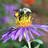 Atelier-conférence : La création d'habitats pour les pollinisateurs urbains & l'apiculture au fil des saisons !