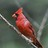 Observation d'oiseaux