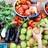 Le pouce vert : Récolte et conservation des semences