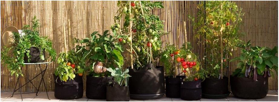 Urbanoculture un projet de jardin urbain for Jardin urbain