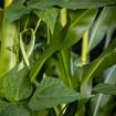 Plantes utiles chez les Premiers Peuples