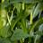 Cueillette et collecte de plantes
